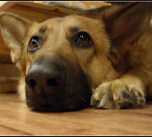 Ami har hittat ett hem: 2010-10-11