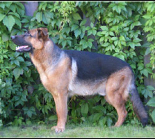 Atle har hittat ett hem: 2012-05-23