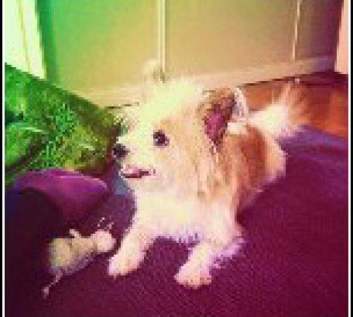 Bosse har hittat ett hem: 2014-02-15