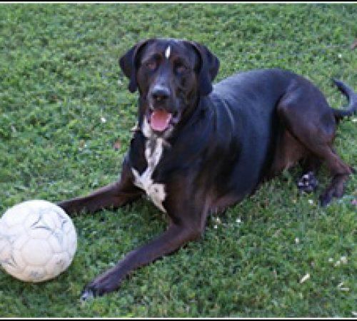Chippen har hittat ett hem: 2010-09-18