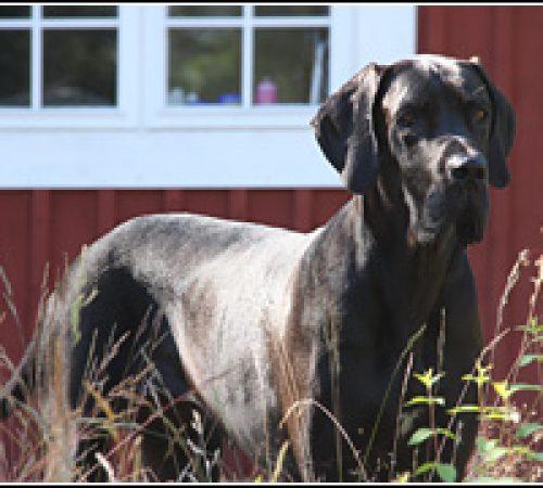 Daphne har hittat ett hem: 2012-11-15