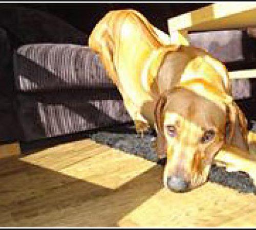 Diezel har hittat ett hem: 2011-03-06]