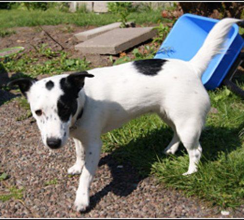 Dorra har hittat ett hem: 2012-07-30