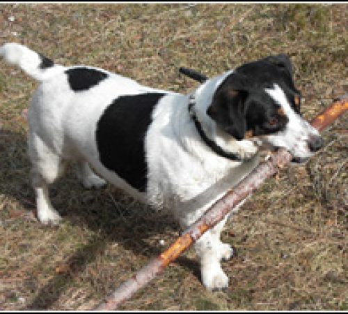 Douglas har hittat ett hem: 2011-02-22