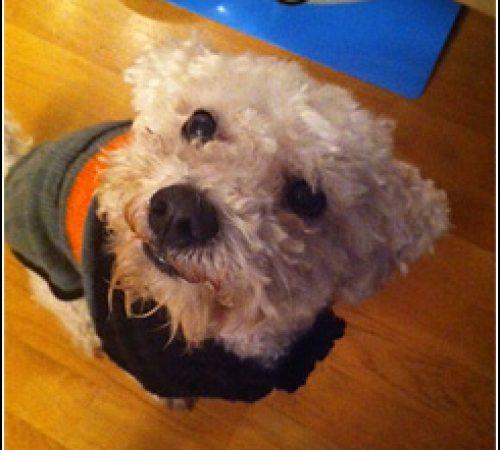 Hugo har hittat ett hem: 2012-04-29