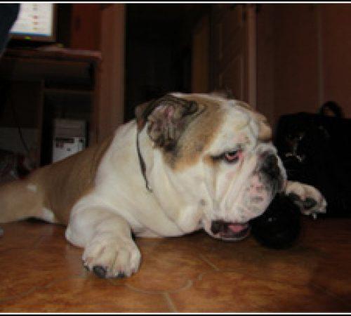Jabba har hittat ett hem: 2011-10-12