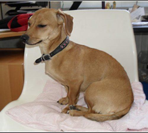 Nicky har hittat ett hem: 2011-06-01