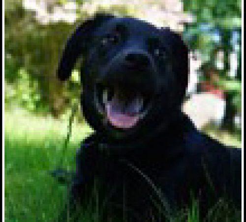 Rufus har hittat ett hem: 2015-05-26