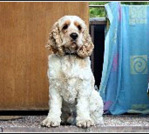 Winston har hittat ett hem: 2012-03-31