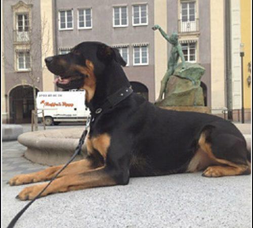 Zeus har hittat ett hem: 2015-09-25
